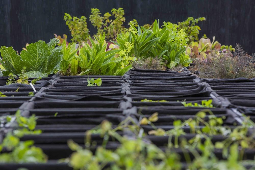 A garden at an airport? JetBlue opens a potato farm at New York JFK ...