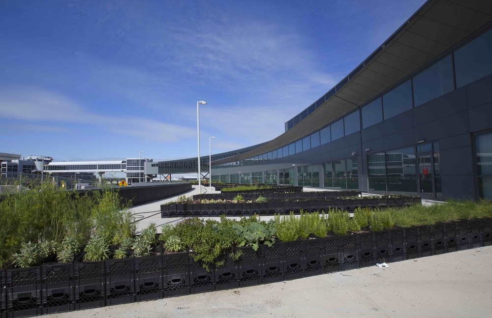 JetBlue has a new garden at New York John F. Kennedy Internatonal Airport. Photo: JetBlue.