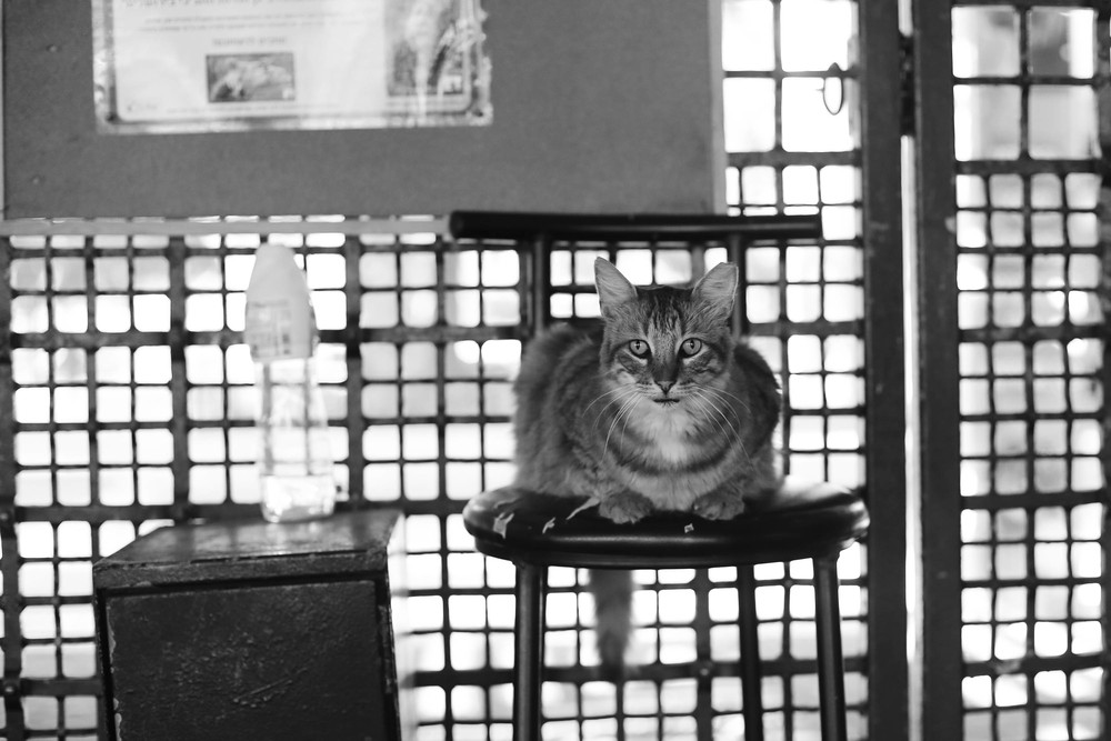 As we leave, a wise looking cat holds down the ticket booth.