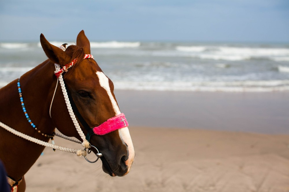 Horse rides for hotel guests and tourists on Labadi Beach.