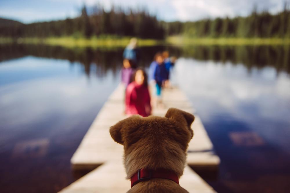 A dock... water... Déjà vu...RUN for your life!!!