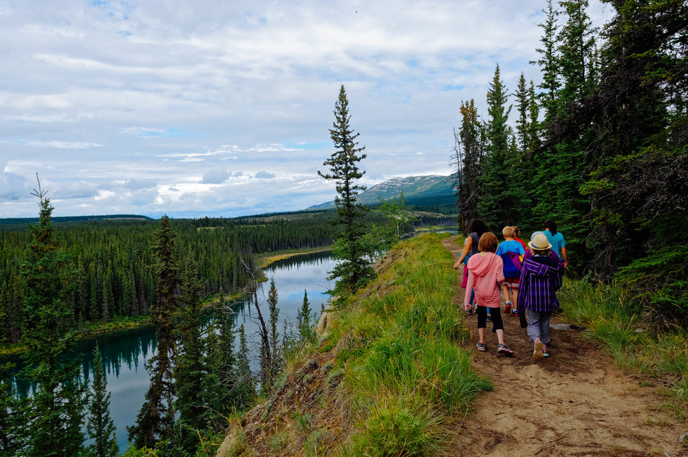Hiking along the Yukon River and learning about plants and trees as we go.