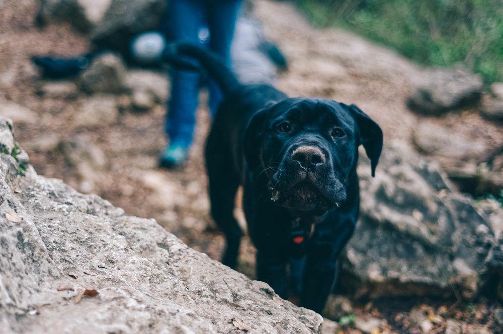 Woof! Happy crag dog!