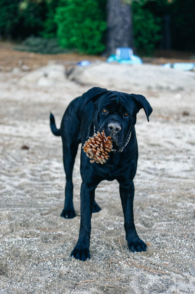 Sticks are so overrated. I retrieve pinecones.