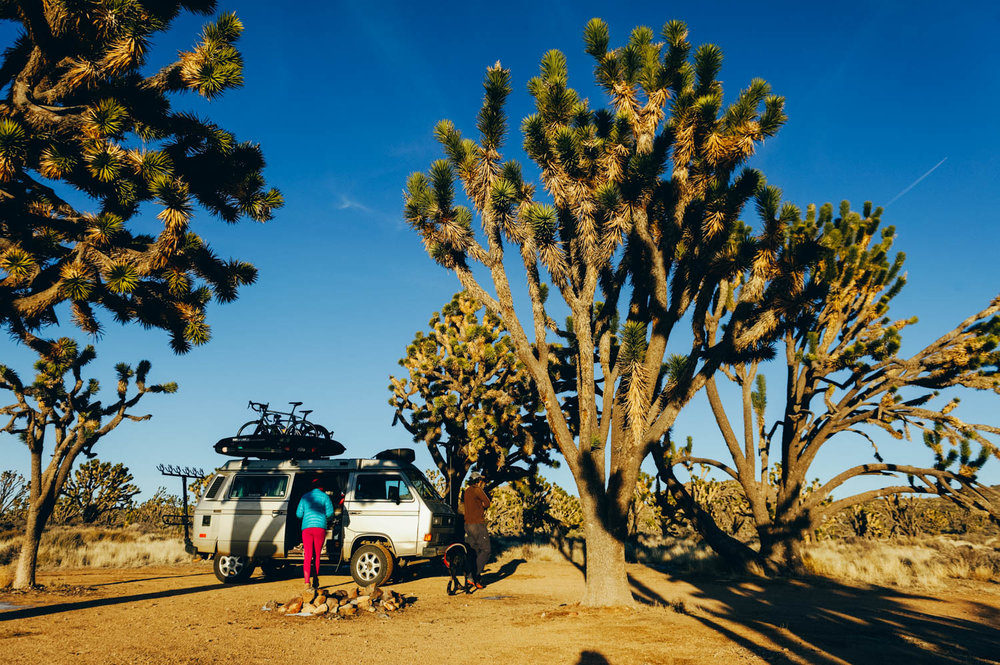 Great campspot among the Joshua Trees.