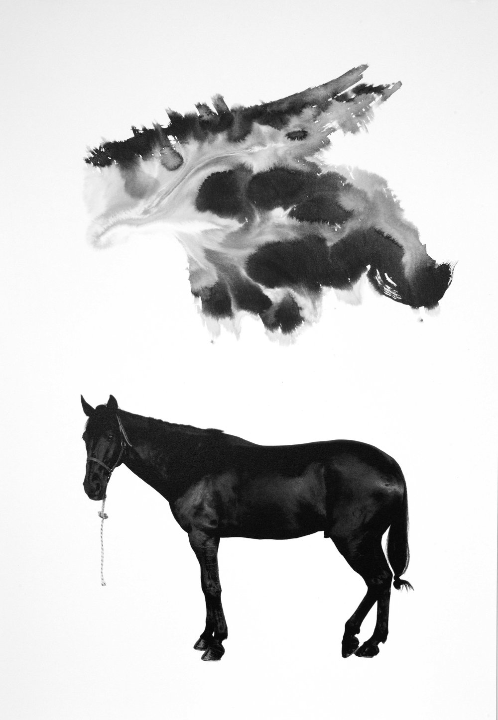 Noir 11