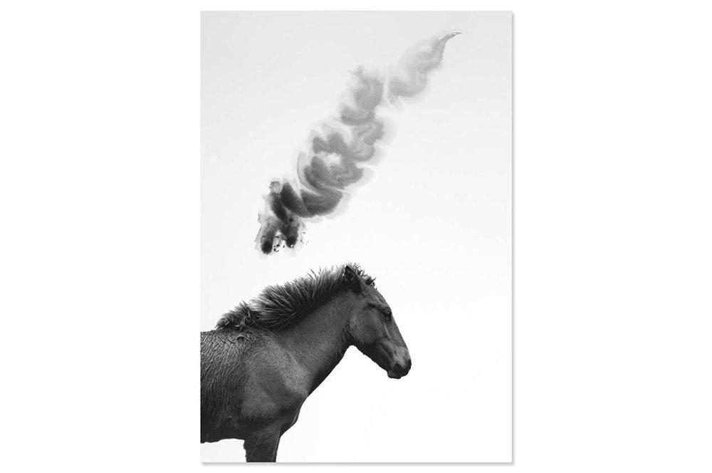 ARTISTS' BOOK  [NEW]    Charlotte Dumas THREE HORSES