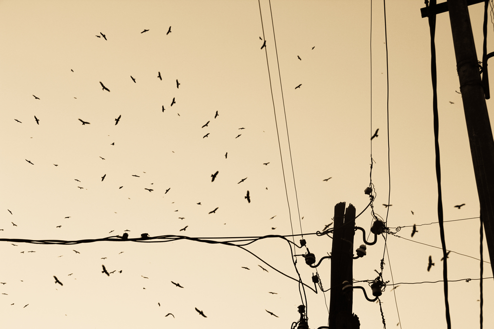 1 TelephoneWires.Addis.jpg