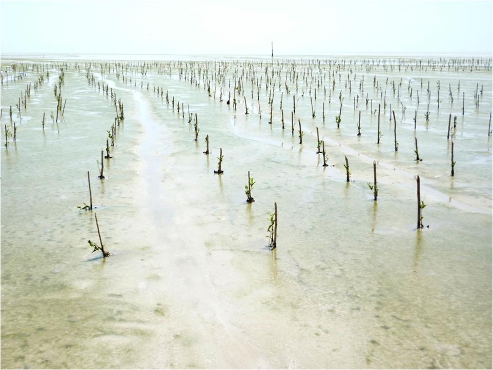 GIDEST_mangrove 2.jpg