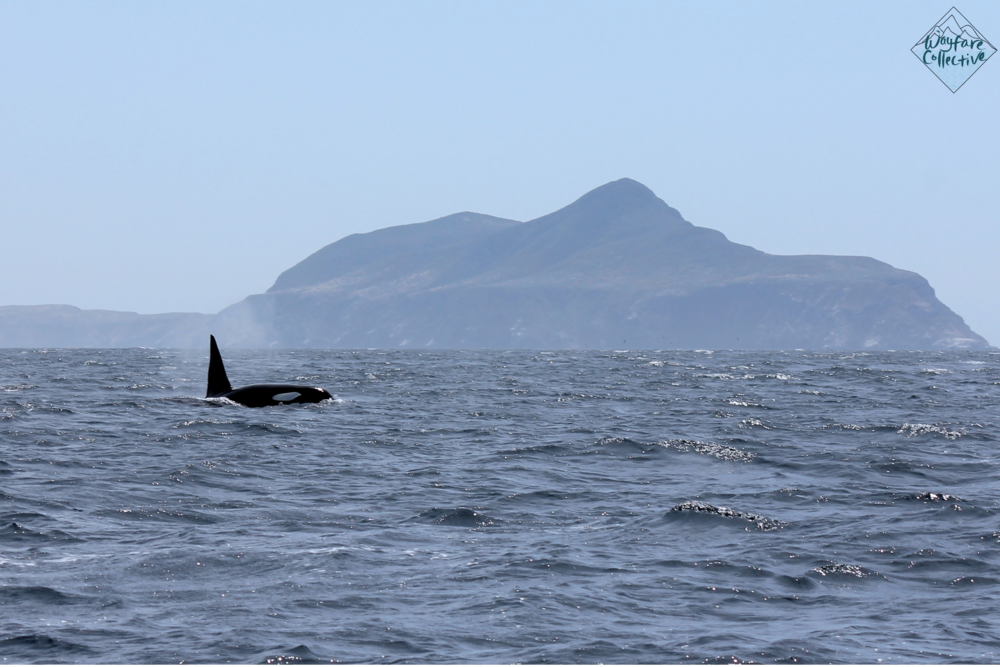 Papa Orca and Anacapa Island
