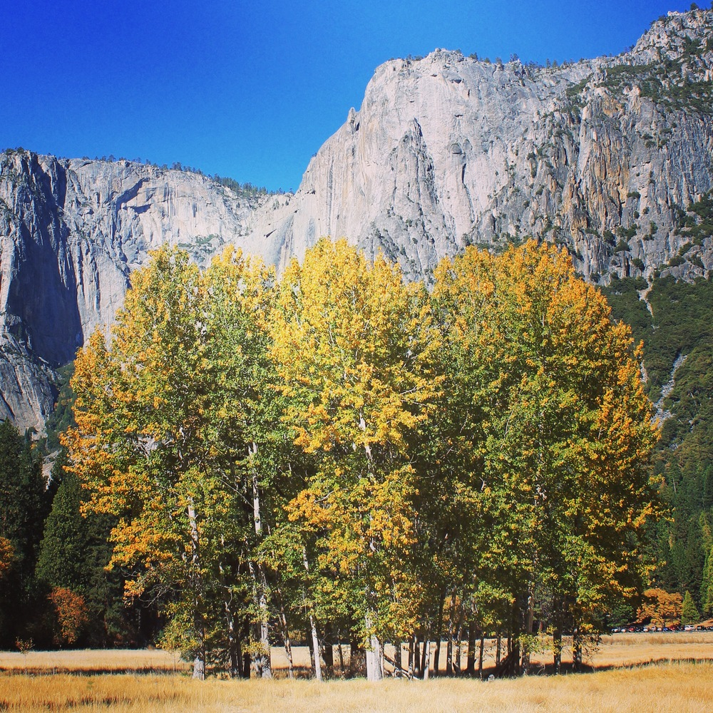 Seeing these colors is just one of the many reasons to visit Yosemite in the fall.