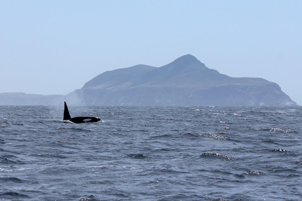An Orca and Anacapa Island. Adventures don't get much better than this!