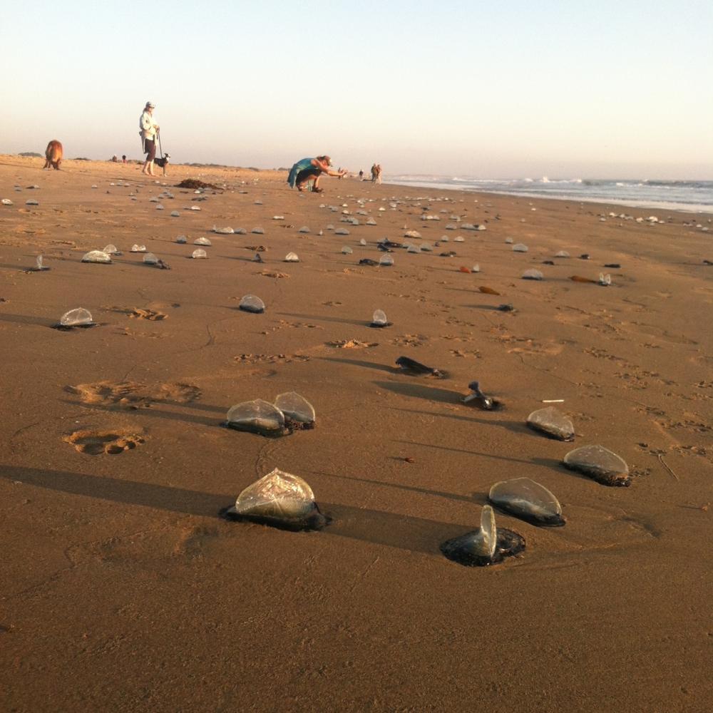 Valella Valellaon Pismo Beach