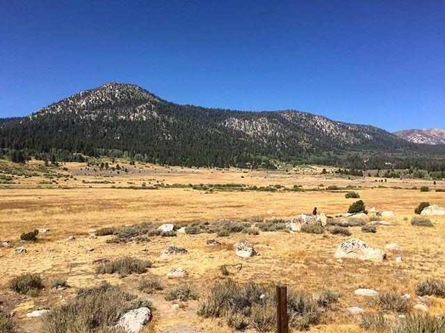 Sierra adventures. #sierranevada #carsonriver #sierra #rei1440project #california #iheartcalifornia #getoutside #explore #getoutstayout