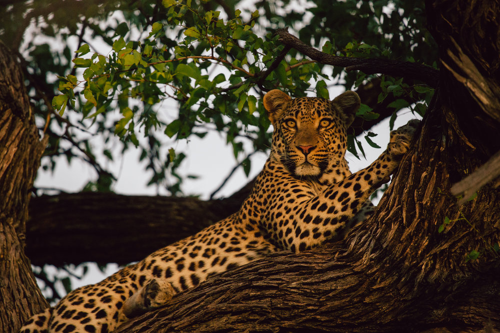 africa_sandynoto-46.jpg