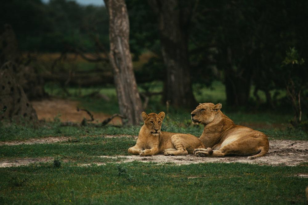 Botswana_sandynoto-2.jpg