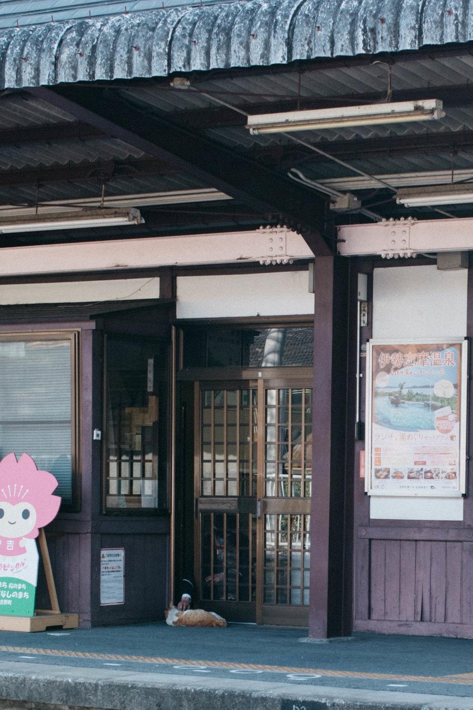 Visiting Yoshino in Japan