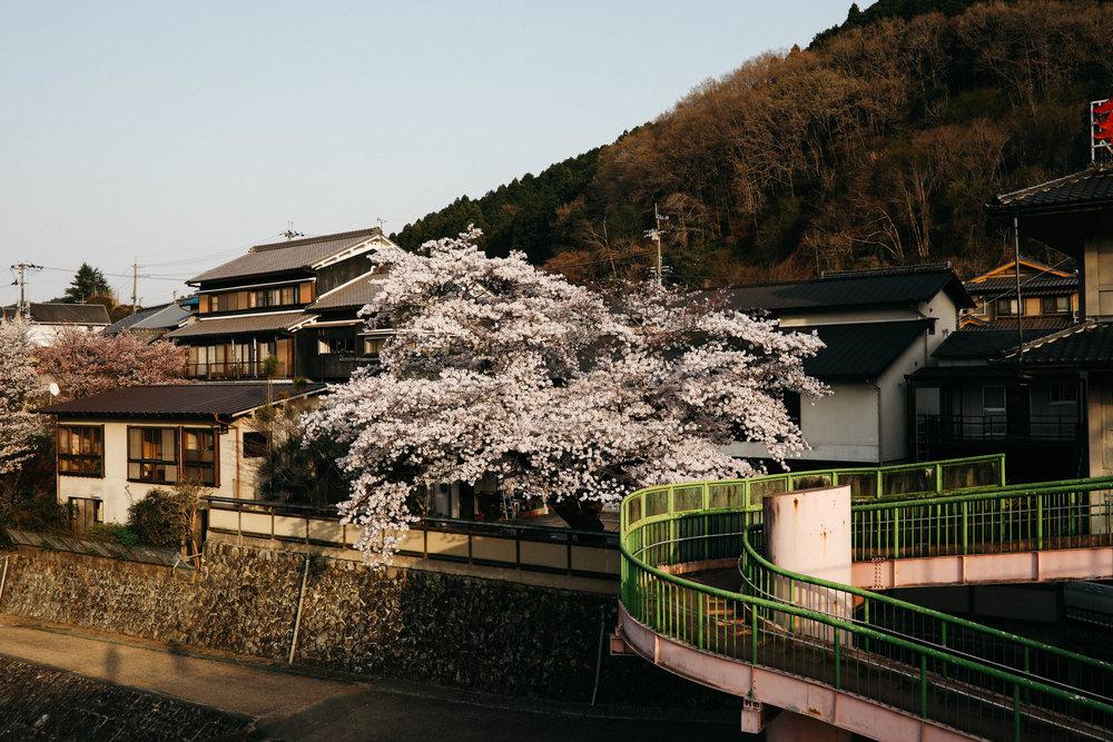 Visiting Yoshino