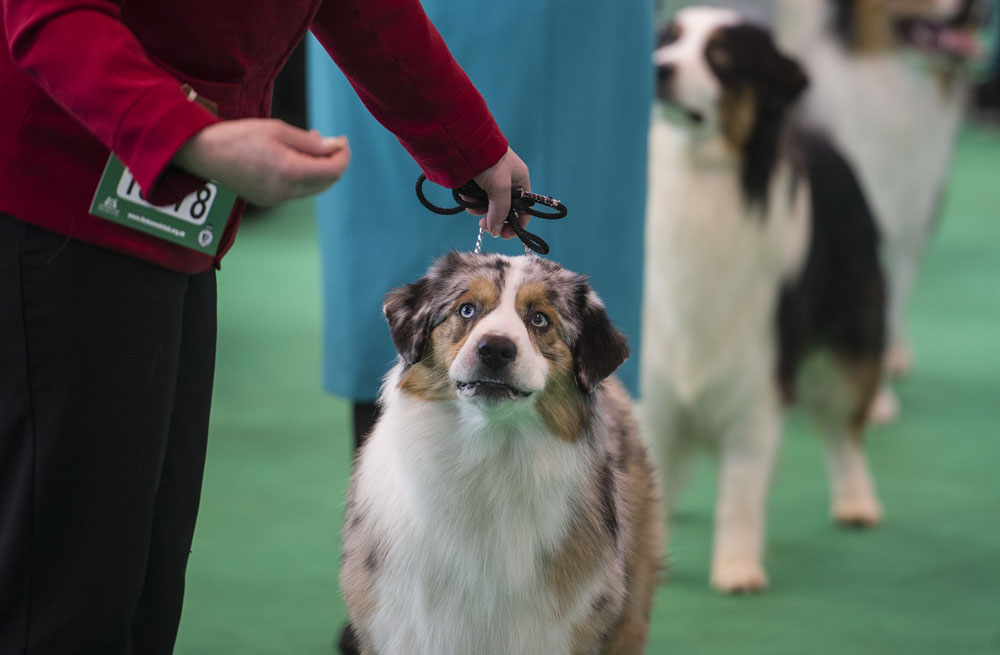 Crufts 2016 - Day 3
