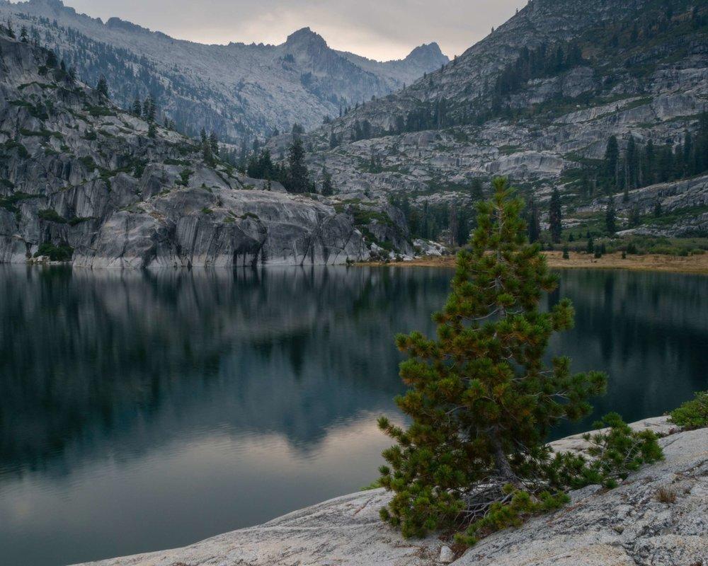 lake with pine.jpg