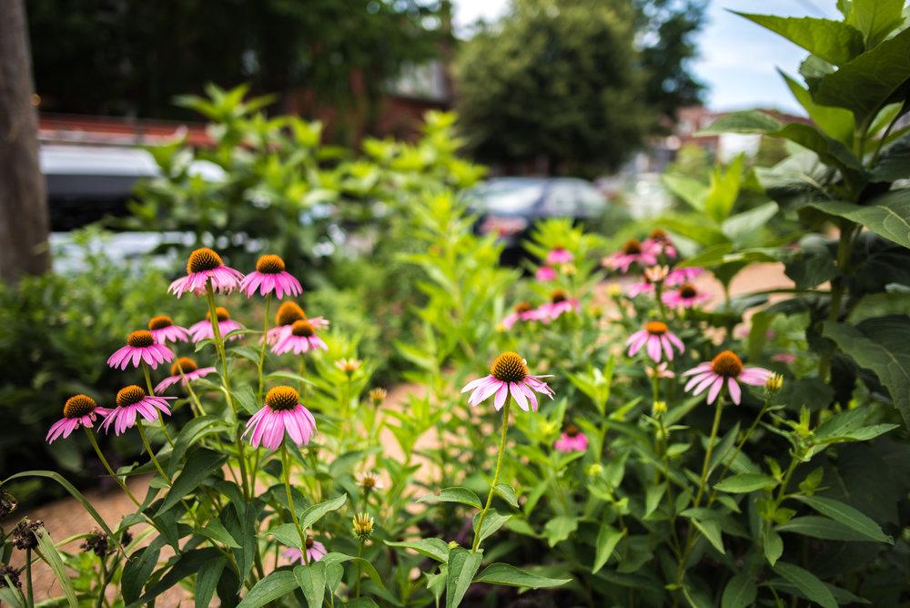 Garden-Tour-33.jpg