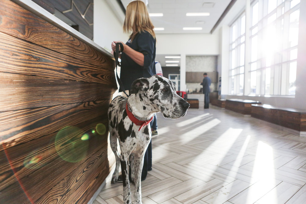 ANIMAL CARE   Spaces for Care