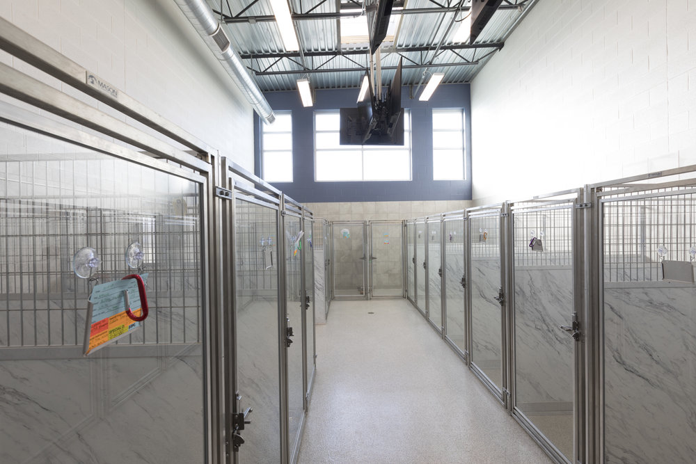 ANIMAL CARE   Spaces for Boarding