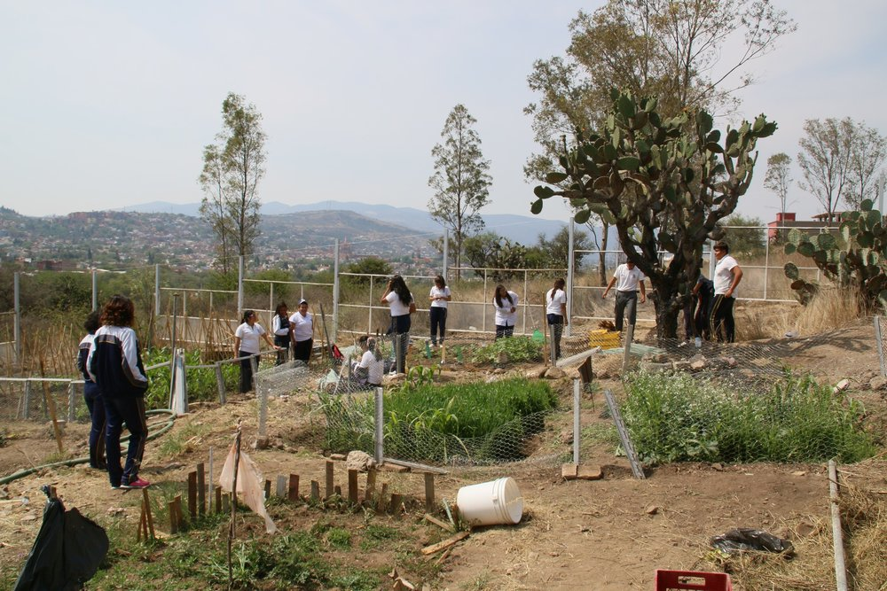 Students work in the nearby school gardens.