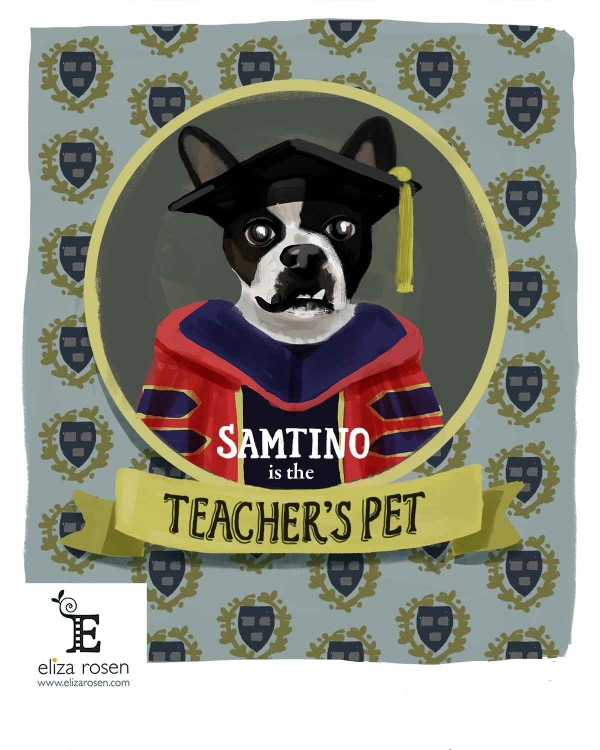 Samtino, the Boston Terrier, is the Teacher's Pet