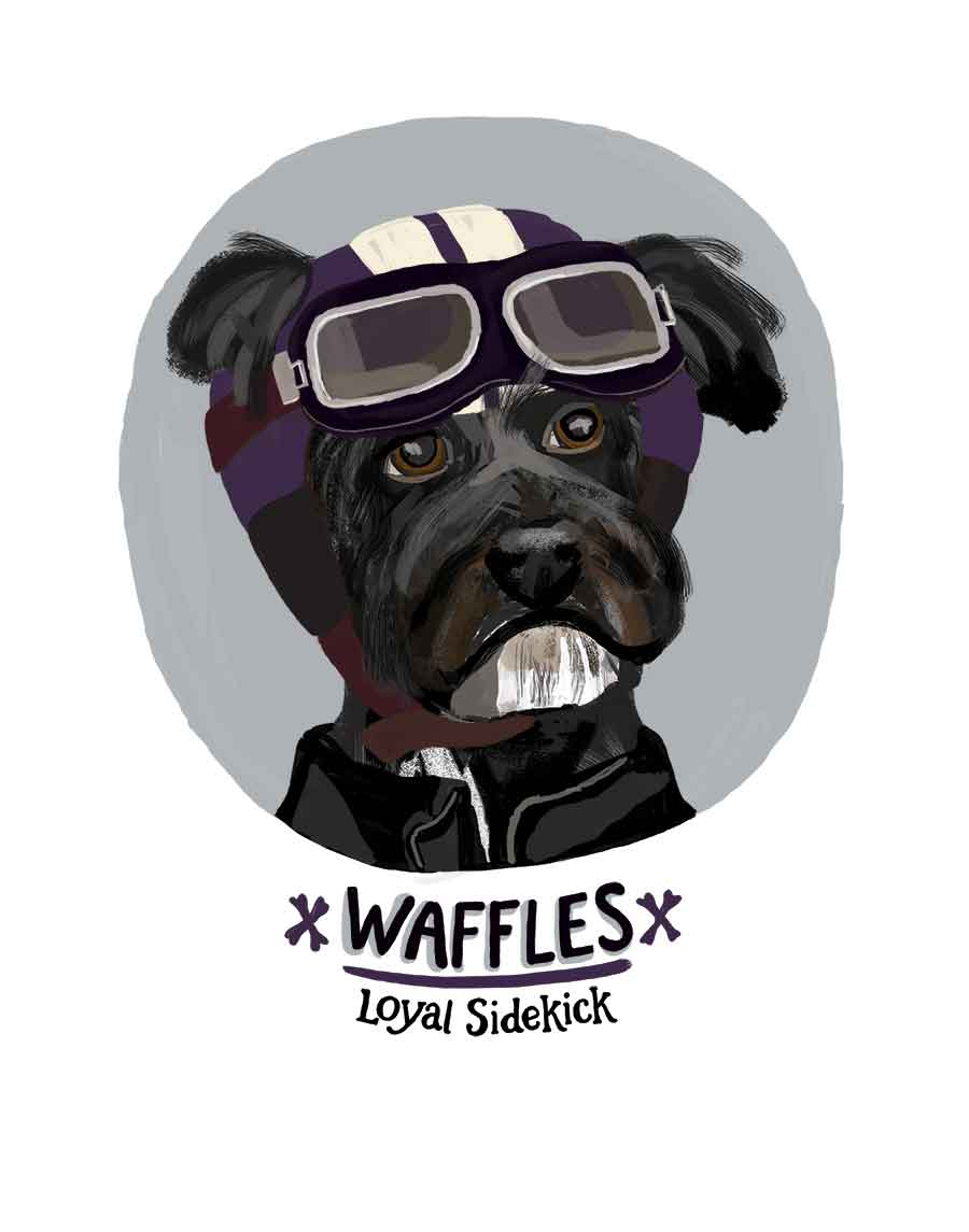 Waffles, the Schnauzer / Terrier