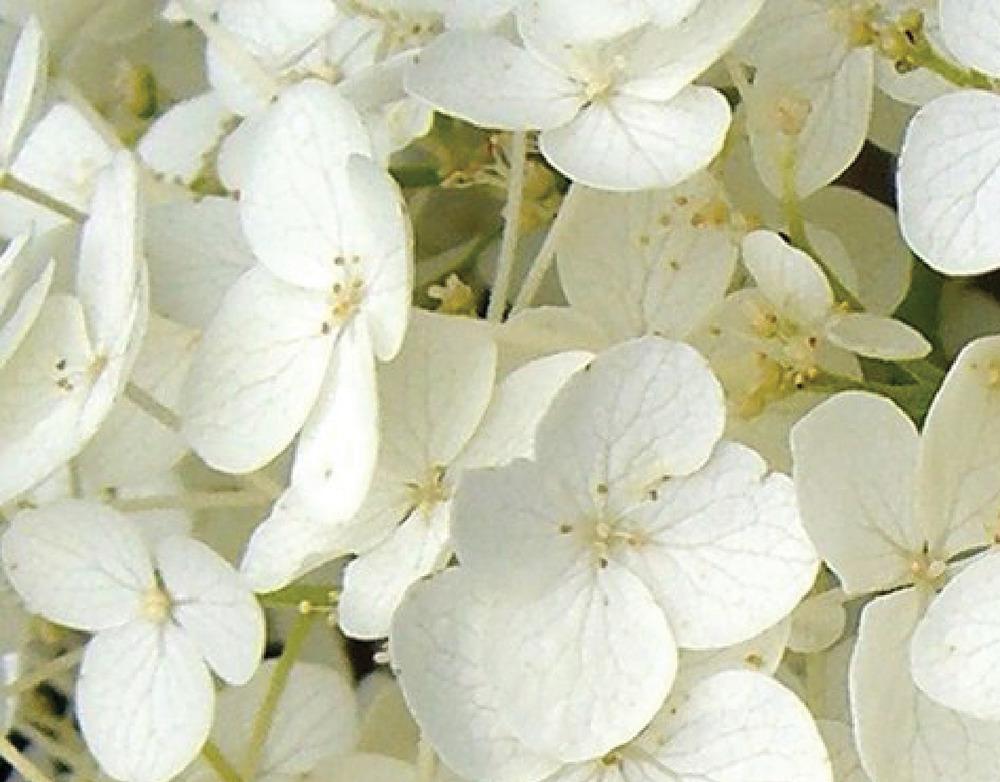 Flower Guild