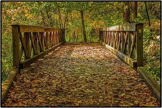 Forest Trail, Bridge 5.jpg