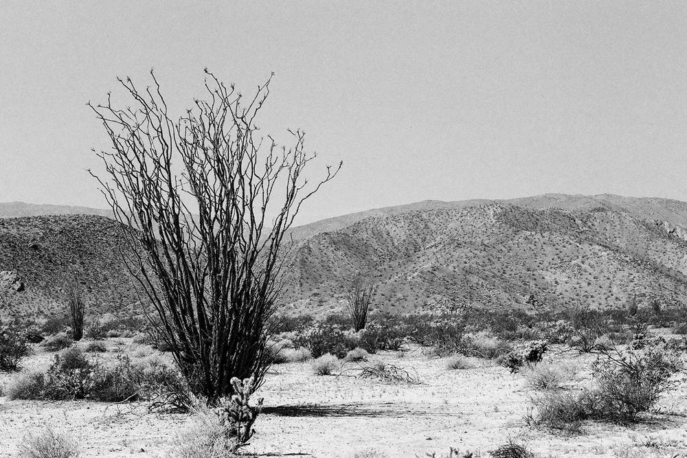 +Anza-Borrego-Cactus-05-4x6.jpg