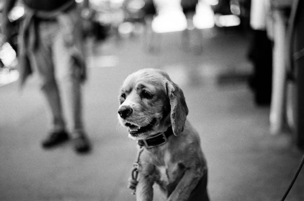 +Anza-Borrego-Dog-01.jpg