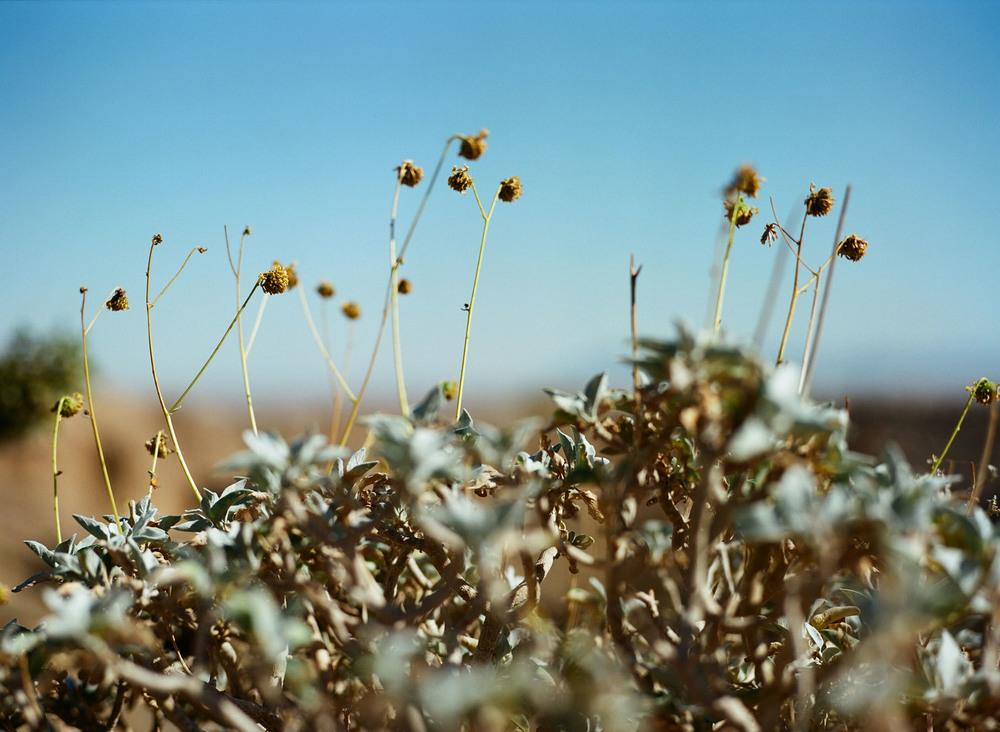 +Anza-Borrego-Plants.jpg