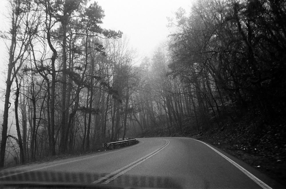 Chattanooga-trees-01.jpg