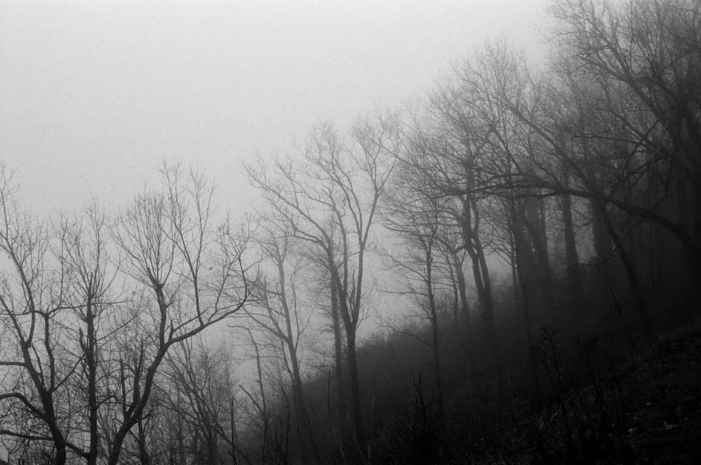 Chattanooga-trees-02.jpg