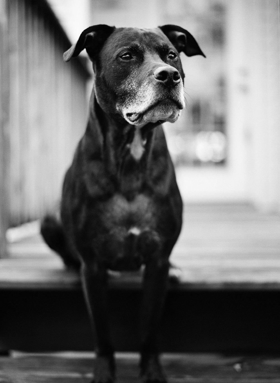 Dog-Mamiya-645.jpg