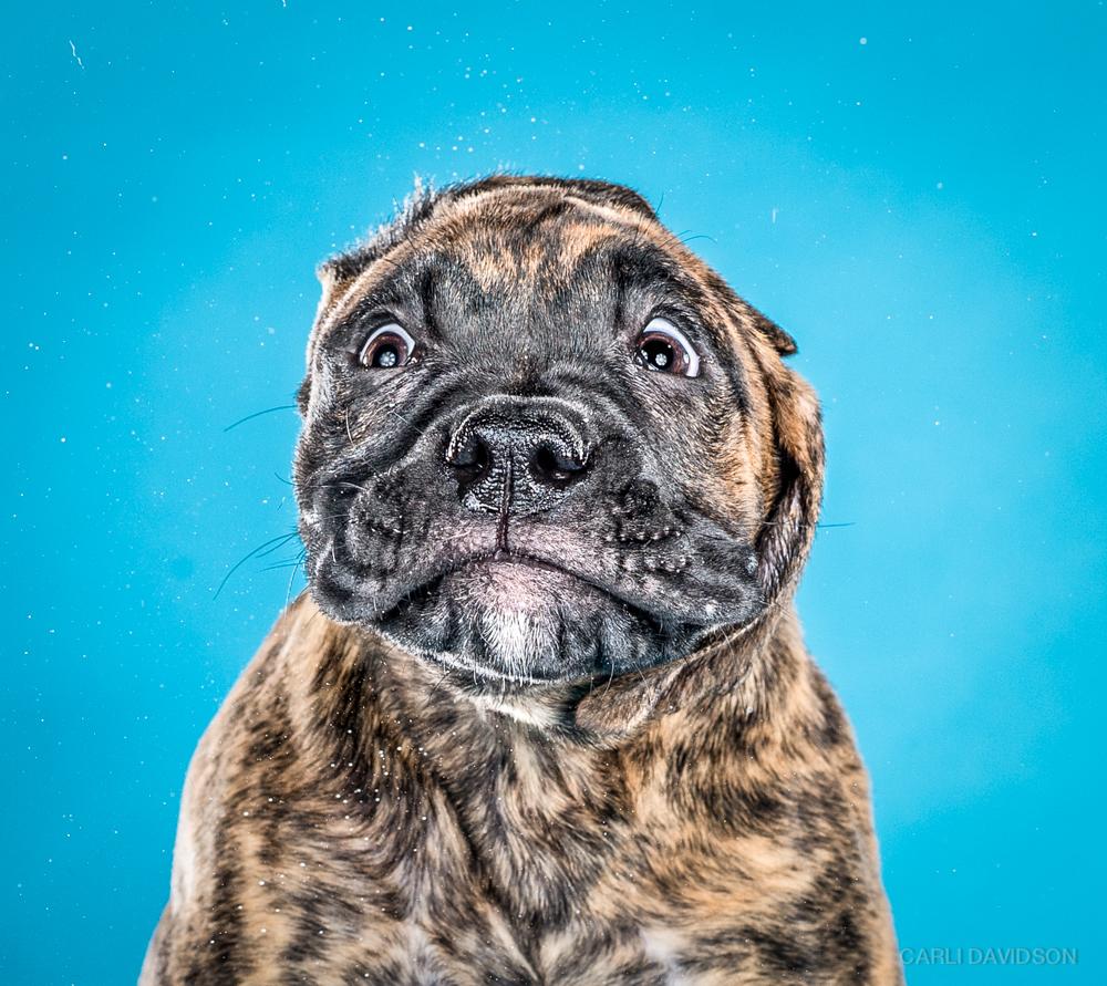 Shake Puppies-1_Mixbreed.jpg