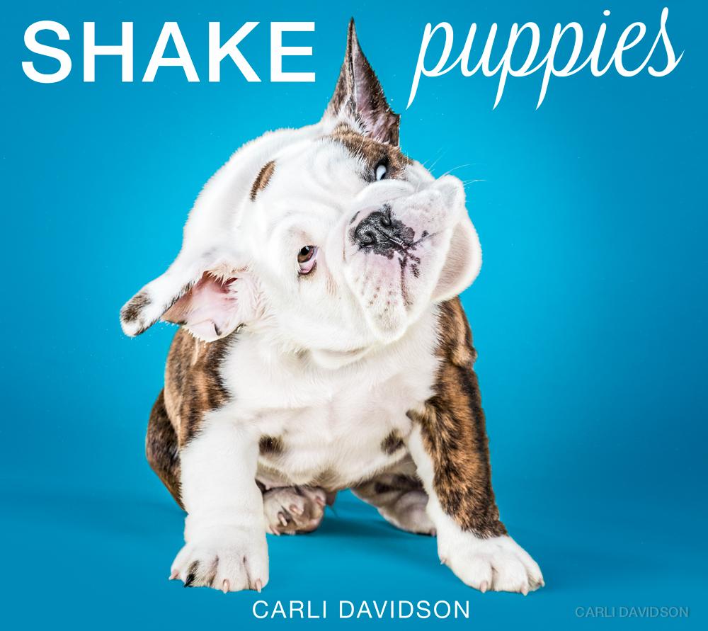 Shake Puppies-15_English Bulldog.jpg