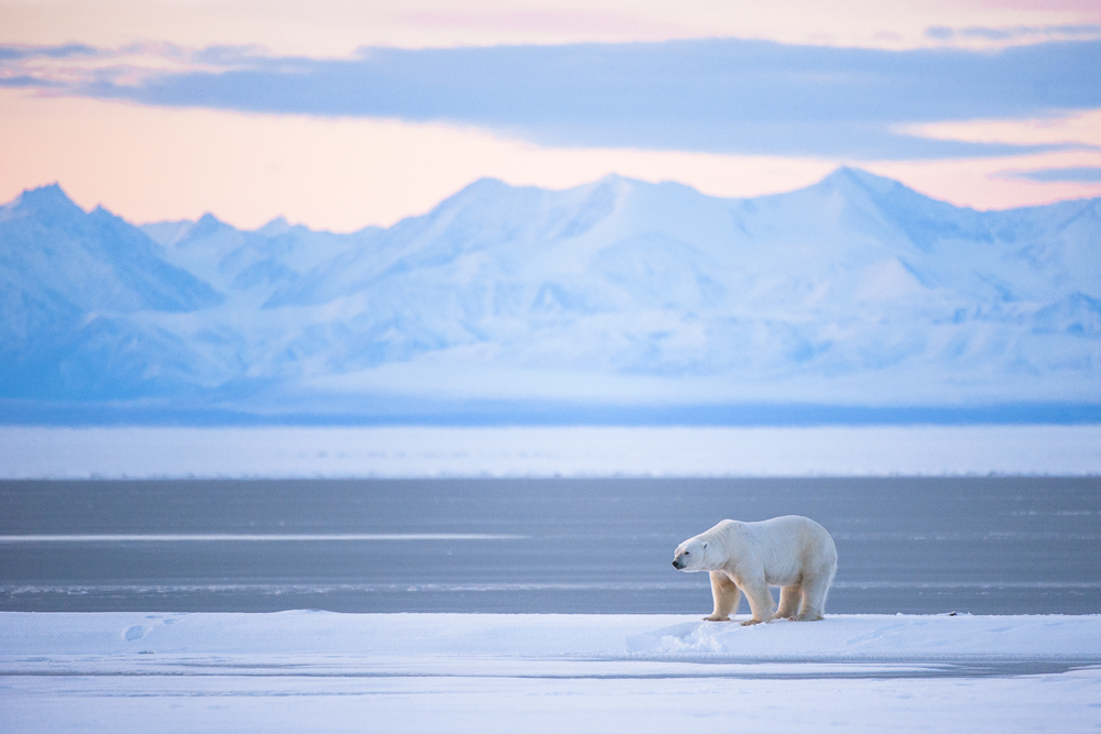 Full package Alaskan tour - view polar bears in the wild!
