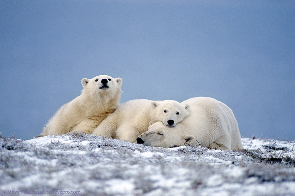 Beaufort Sea Arctic Ocean habitat environmental conservation nature