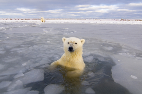 Polar bear tour