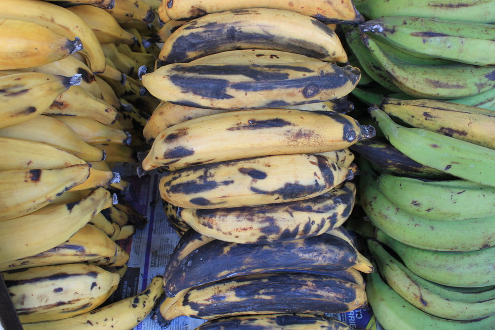 Plantain in varying stages of ripeness