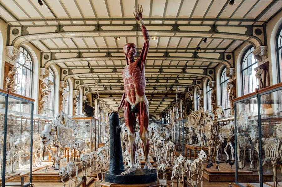 Museumnationaldhistoirenaturelle_paris21.jpg