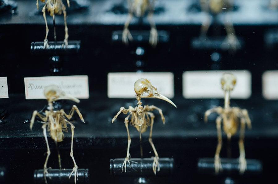 Naturhistoriska museet i Paris