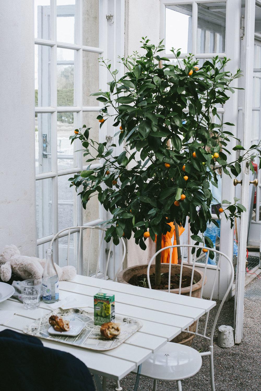 Gamla Orangeriet café och restaurang i Bergianska trädgården