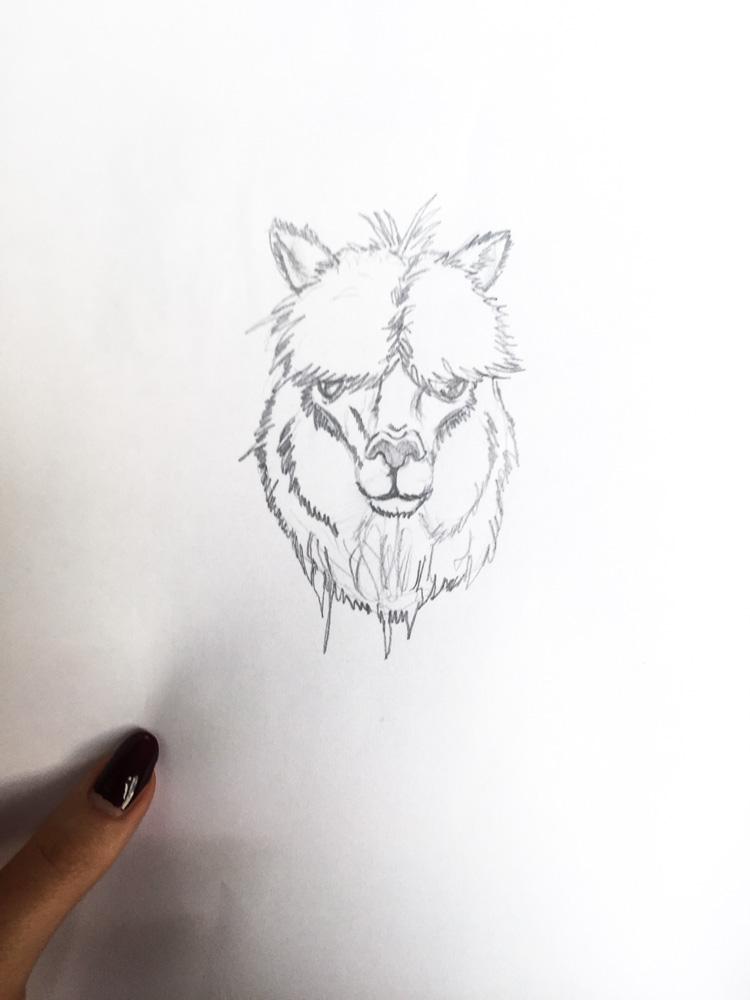 alpacka teckning rita