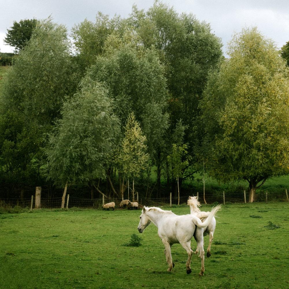 hästar på den engelska landsbygden Worcestershire