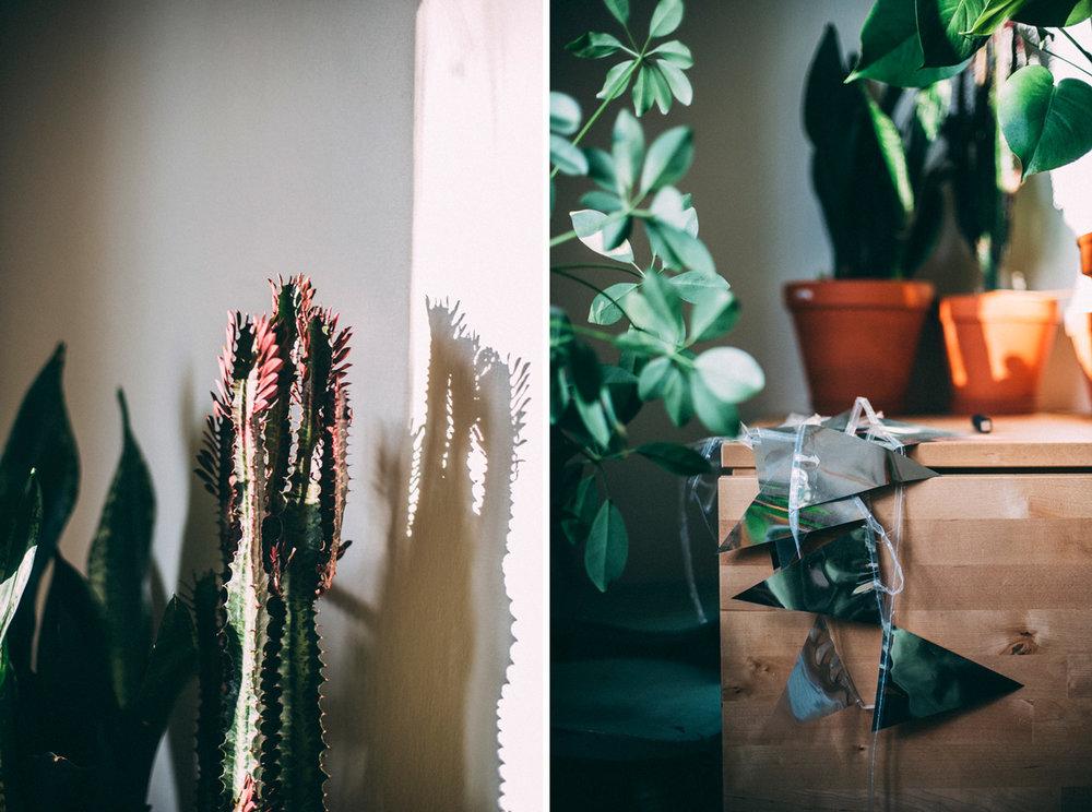 inreda med växter södermalm stockholm